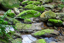 Mountain Stream Among The Gree...