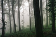 Leinwanddruck Bild natural forest landscape, trees in fog in dark woods
