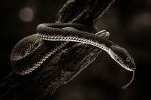 Close-up Of Snake On Tree At Night