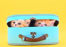 Two Cute Kittens In A Case Wit...