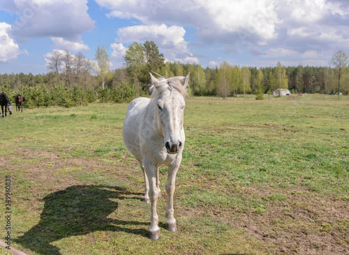 One small gray horse stands and looks towards the photographer. Canvas-taulu