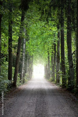 Okleiny na drzwi - Lasy - Drzewa  a-tunnel-of-the-single-lane-country-road-and-tall-green-trees-sunlight-through-the-tree-trunks