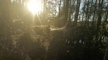 Sun Shining Through Trees In Forest