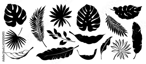 Set of Tropical leaves. Collection black leaves palm, fan palm, banana leaves. Nature leaves collection. Vector illustration.
