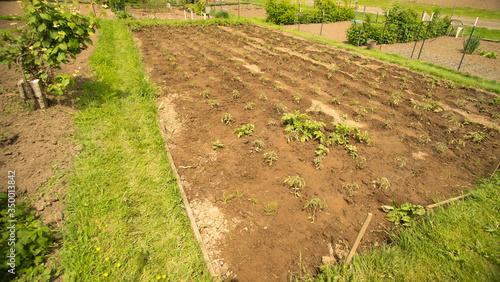 Fresh tilled garden-Landscape photo of a managed garden growing vegetables Wallpaper Mural