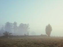 Trees On Grassy Field In Foggy Weather