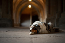 Dog In An Old Castle. Low Key....