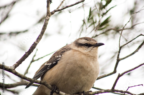 Photo Retrato de un ave gris en un árbol