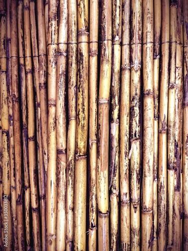 Tableau sur Toile Detail Shot Of Bamboos