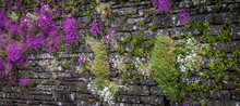 View Of Purple Flowers Growing On Stone Wall