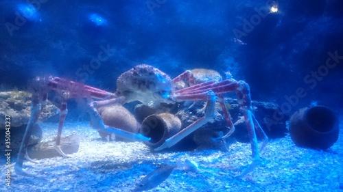 Valokuvatapetti Close-up Of Crab In Aquarium