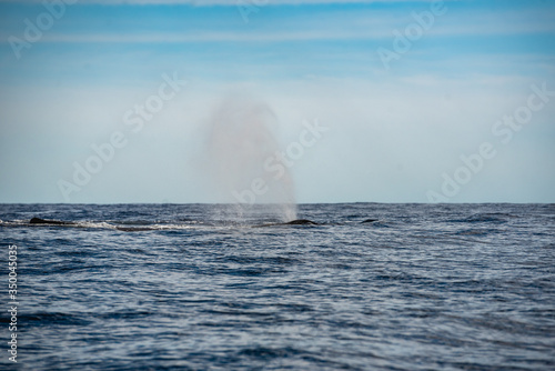 Fotografie, Tablou Water splash from the blowhole of a whale humpback in Los Cabos Mexico
