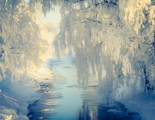 Snow Covered Trees Over River