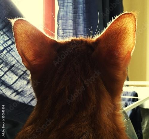 Fotografiet Close-up Of Ginger Cat