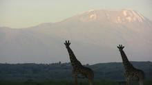 Giraffes On Field Against Mountain