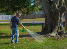 Homeowner Man Spraying Weed Killer On His Front Yard With A Hose Attachment Full Of Chemicals That Kills Weeds And Fertilizes The Grass.