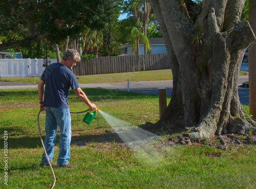 Homeowner man spraying weed killer on his front yard with a hose attachment full of chemicals that kills weeds and fertilizes the grass Canvas Print