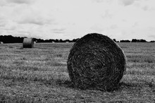 Rolled Up Hay Bales In Agricul...