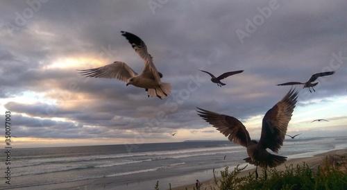 Canvas-taulu Birds Flying By Sea Against Cloudy Sky At Dusk