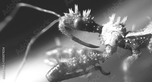 Photo Extreme Close-up Of Assassin Bug