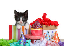 Close Up Of Black And White Tuxedo Kitten Peaking Out Of A Colorful Striped Birthday Present Next To A Tiny Pedestal Table With Cup Cake. Surrounded By Colorful Curly Ribbon And Party Hats