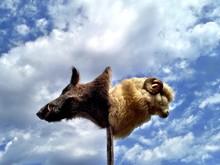 Dead Wild Boar And Bighorn Sheep Against Cloudy Sky