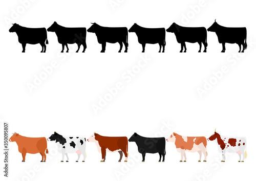 Tablou Canvas various cows in a row