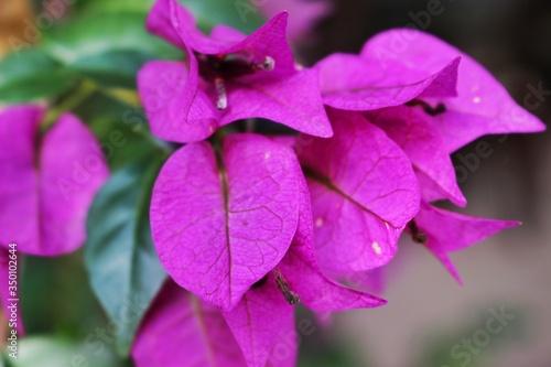 canvas print motiv - bianca pereira/EyeEm : Close-up Of Pink Flowers