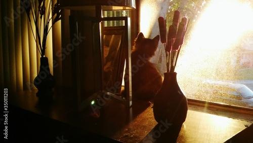 Fotografia Cat Sitting On Table By Window Sill