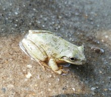 Close-up Of Frog On Shallow Wa...