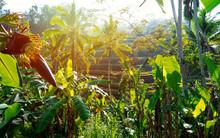 View Of Beautiful Nature Envir...