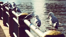 Seagulls Perching On Railing At Pier Against River
