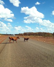 Cows Crossing Country Road Against Sky