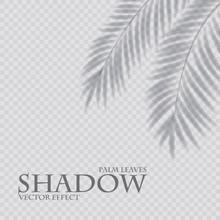Palm Leaf Shadow Transparent E...