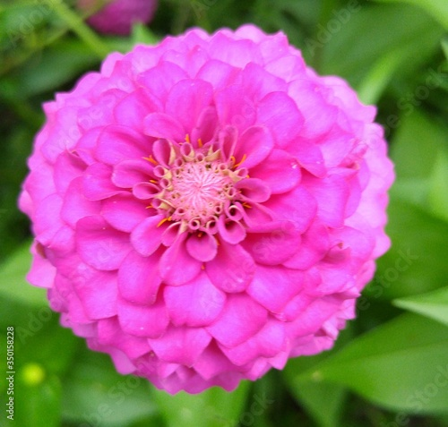 canvas print motiv - alsennia smith/EyeEm : Close-up Of Pink Flower Blooming Outdoors