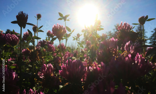 Fotografie, Obraz Low Angle View Of Pink Flowers Blooming At Park