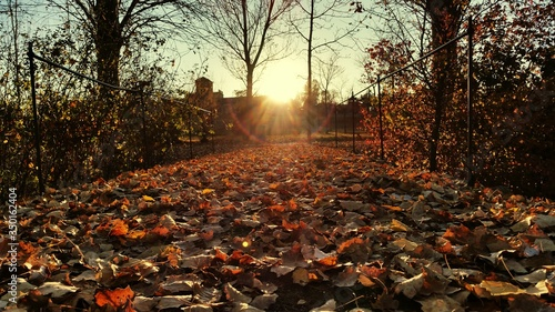 Footpath Covered With Autumn Leaves Wallpaper Mural