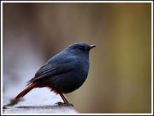 Close-up View Of Black Bird