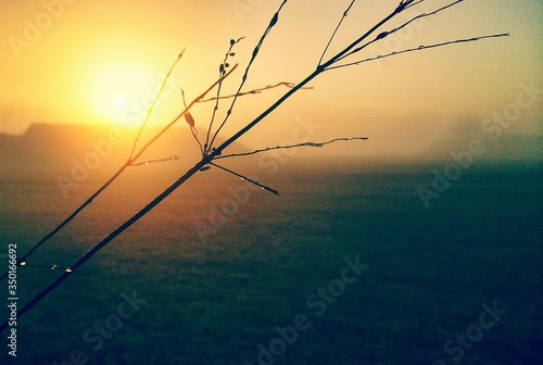 Twigs Over Field In Foggy Weather During Sunset Fototapeta