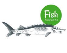 Hand Drawn Vector Fish. Fish A...