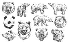 Grizzly Bear And Panda Vector ...