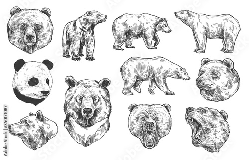 Fotografía Grizzly bear and panda vector sketches, isolated icons set