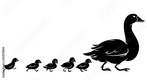Fotografia Duck and Duckling, Walking Silhouette