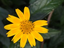 Yellow Flower With Missing Petals