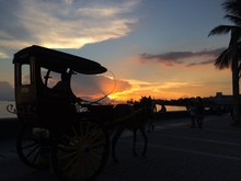 View Of A Horse Carriage At Sunset