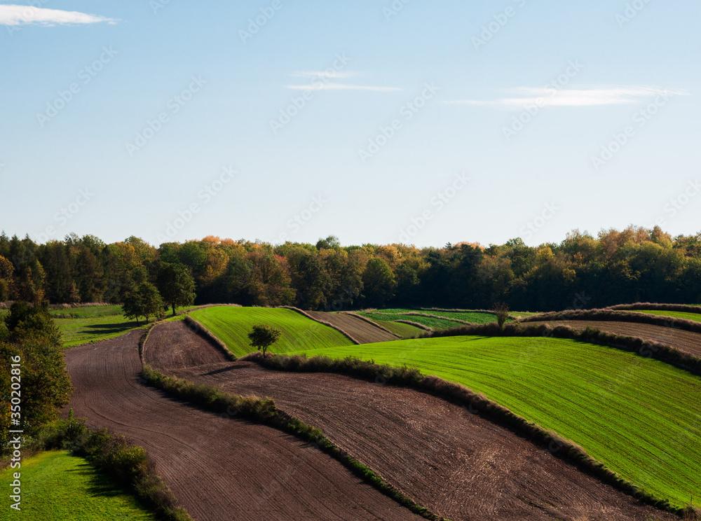 Fototapeta mozaika pól na tle jesiennych kolorów drzew lasu,  bezchmurne błękitne niebo