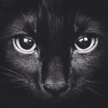 Full Frame Of Black Cat