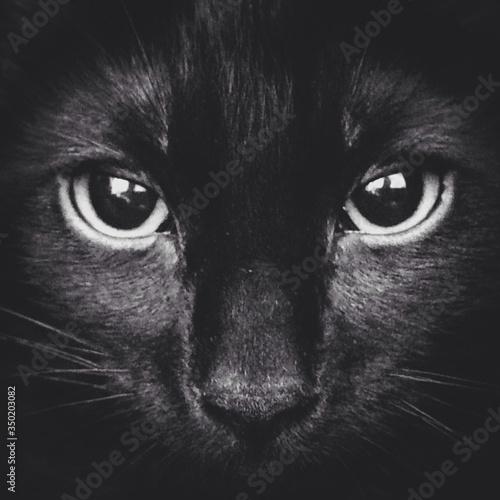 Full Frame Of Black Cat Fototapeta