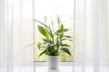 Air Puryfing House Plants In H...