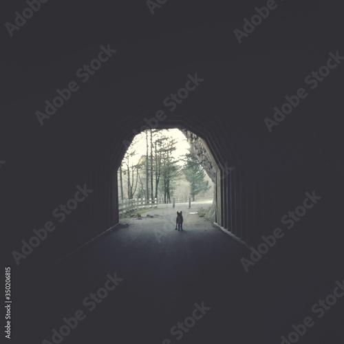 Dog Standing In Tunnel Fototapeta